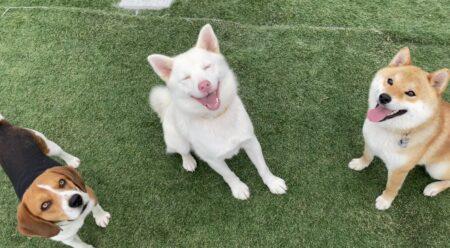 世の中で教わる犬の飼い方では、人間も犬も幸せになれない 神様の導き通りに飼ってこそ、人間も犬も幸せになれる(十二弟子・KAWATAさんの証)