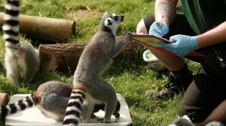 米北東部の動物園で動物たちへのコロナワクチン接種を開始 動物まで殺戮して金儲けを企む創価企業ファイザー社