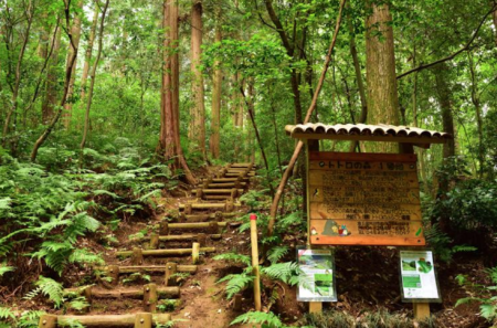 トトロの森で白骨遺体発見 悪魔崇拝者による儀式殺人の可能性大